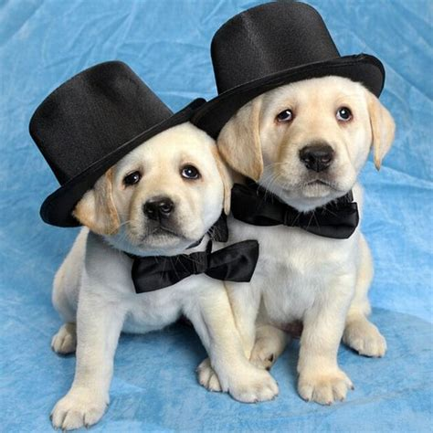 dogs wearing hats animal pictures 22 adorable animals wearing hats