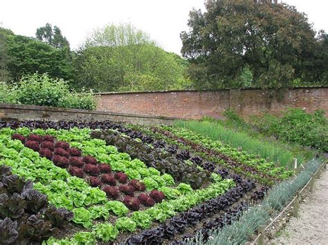 40 Vegetable Garden Design Ideas What You Need To Know Decorative Vegetable Garden