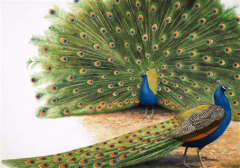 Home Decor Blogs India peacocks painting by rb davis