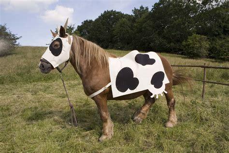matratze öko ko kostume til dyr