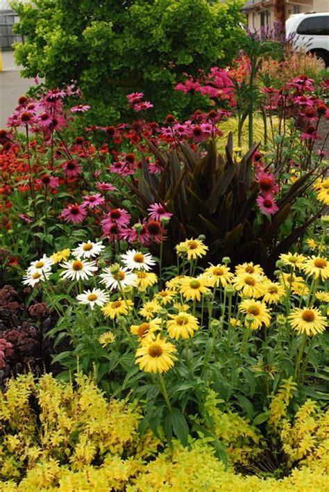 anna s perennials fall flowering perennials 152 best images about my outside on pinterest gardens