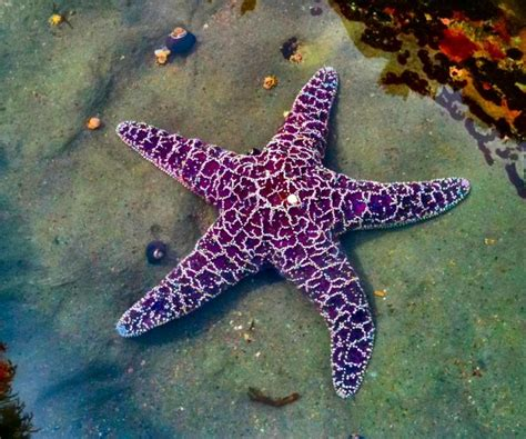 26 best images about tide pools on pinterest tide pools
