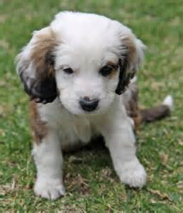 cutest puppy mixes best 25 mixed breed puppies ideas on mixes puppy breeds and dogs