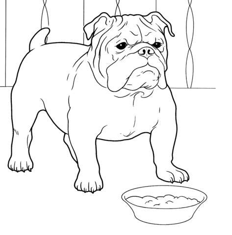 french bulldog coloring page super coloring
