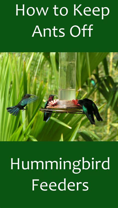 best 25 hummingbird food ideas only on pinterest