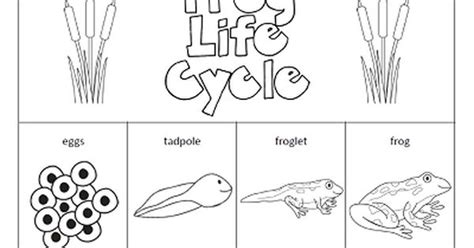 The Paper Maid Frog Life Cycle Http Www Pinterest Com Cycle Of A Frog Coloring Page