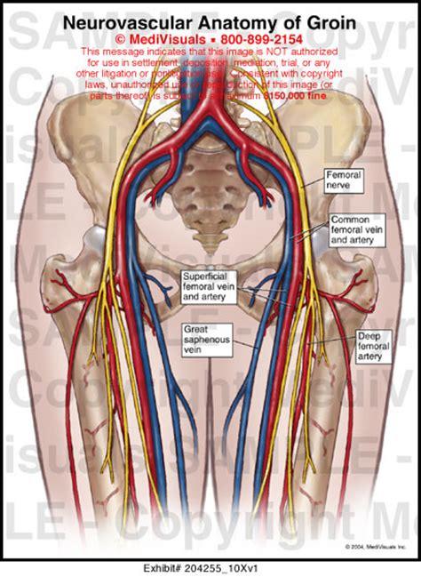 groin area diagram neurovascular anatomy of groin exhibit