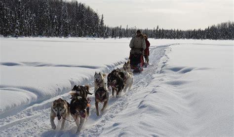 sled tours alaska dallas seavey s alaska sled tours