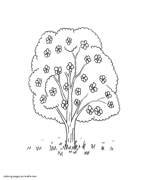 coloring pages of spring trees spring nature coloring page blossom tree