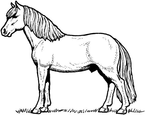 coloring pages of cartoon horses coloring pages photo horse cartoon coloring pages images