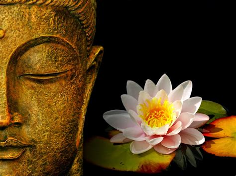 buddha and lotus lord buddha hd images and statue wallpaper pixhome