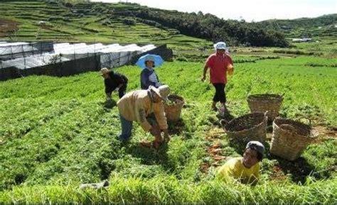 Mga Usapin sa Aking Bayan: Kalagayan ng Agrikultura