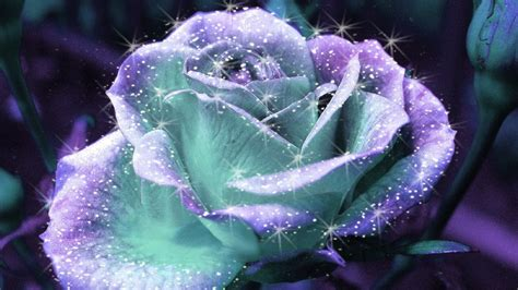 glitter wallpapers of flowers sparkle rose beautiful pictures photo 19401614 fanpop