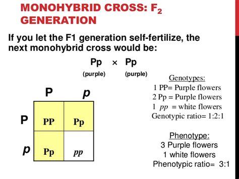 Mendelian Genetics F1 Generation Punnett Square