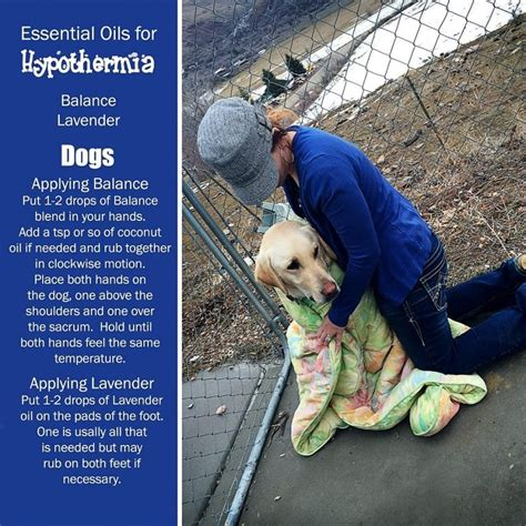 hypothermia in dogs cold weather care for your protect fido from winter