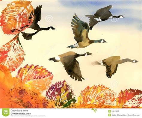 geese migration clipart birds fly pencil and in color