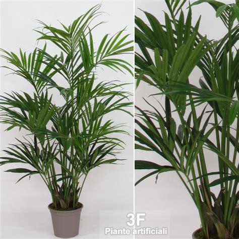 palme da vaso kentia palma altezza cm 150 216 vaso cm 30 3f