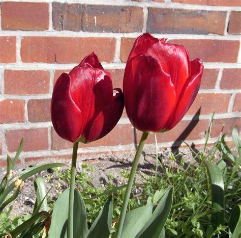 tutorial tas tali kur motif bunga timbul gambar 5 jenis bunga mahal indonesia ritaelfianis tulip