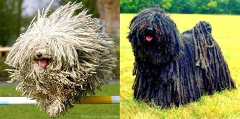 7 Cool Breeds Of Dogs by 13 Coolest Looking Breeds
