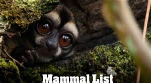 mammals list list of mammal species
