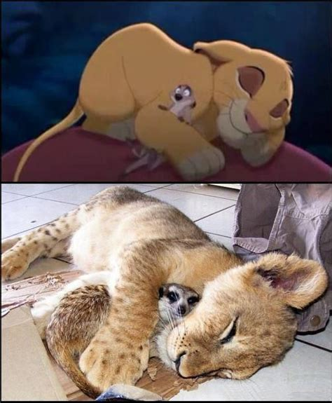 Lion Sex Meme - lion king in real life weknowmemes