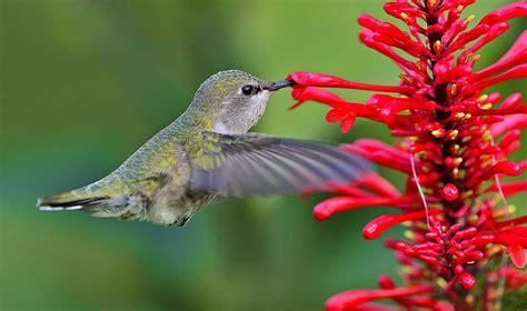 attracting butterflies to your miami garden the 16 best
