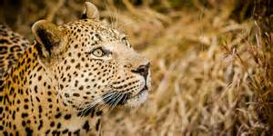Sabi sabi private game reserve wildlife photography tips