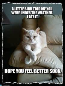 Get Well Soon Meme Funny - get well soon cat meme extravital fasion cats
