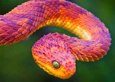 colorful pictures latest photos most colorful animal in the world