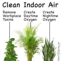 best indoor plants for oxygen house plants for producing and cleaning indoor air