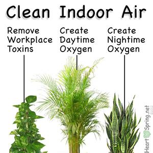 house plants produce clean indoor air
