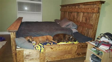 human sized dog bed this wooden king bed frame leaves extra space for your dogs