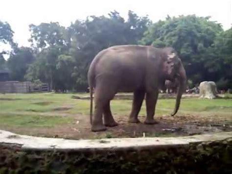 Gajah Lucu gajah lucu