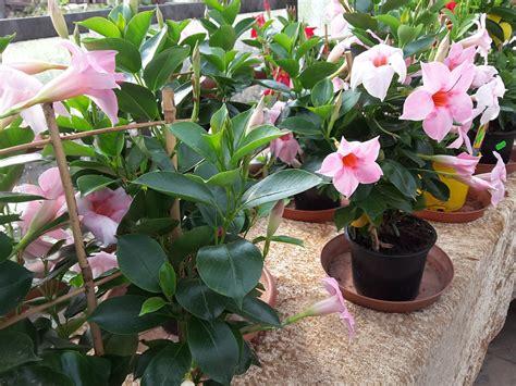 pflegeleichte pflanzen für den garten ruptos kinderzimmer neu gestalten
