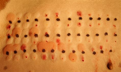 allergy testing for dogs veterinary services available