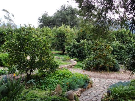 small backyard orchard 17 best ideas about orchard design on pinterest espalier