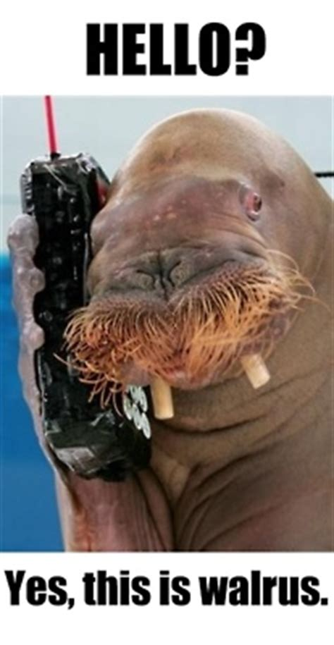 Walrus Meme - 17 best images about oh walrus i love you so on