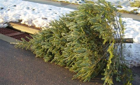 tips for taking down the christmas tree