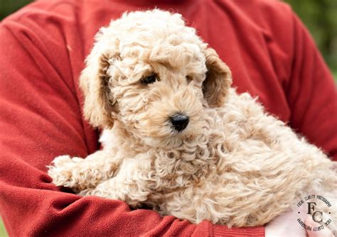 calm puppy breeds dogs with calm temperament breeds picture