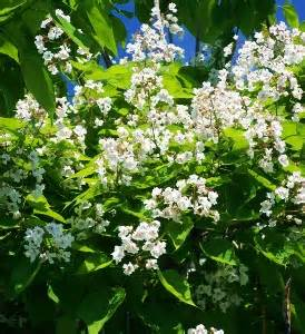 large flowering trees mike s garden top 5 plants