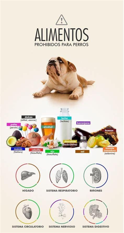 alimentos prohibidos  los perros infografias pinterest