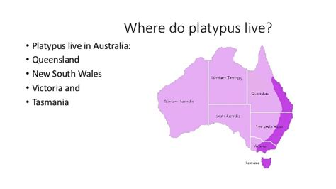 where does live platypus