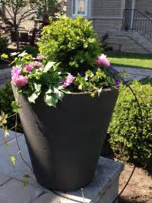 daisy outdoor arrangements for 2012