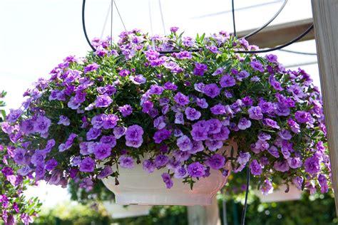 immagini di balconi fioriti balconi fioriti scopri l esposizione giusta mondo