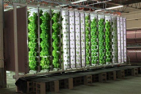 hydroponic garden design ideas vertical garden ideas