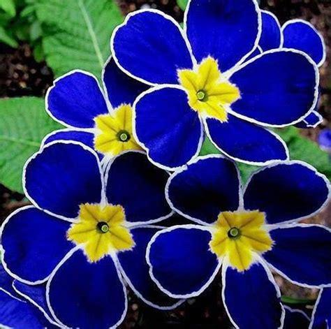 imagenes raras lindas las flores mas raras y hermosas taringa