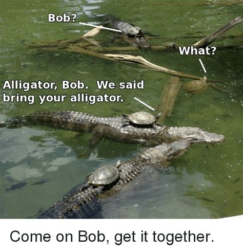 Alligator Meme - bob alligator bob we said bring your alligator what come