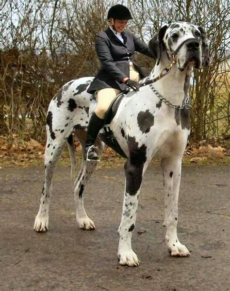 dogs that look like horses animals