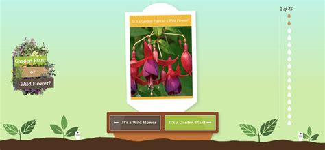 Garden Of Quiz How Well Do You Your Weeds From Your Plants