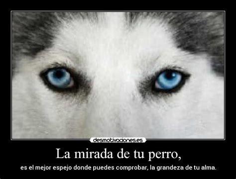 la mirada de los b0719wxrxp la mirada de tu perro desmotivaciones